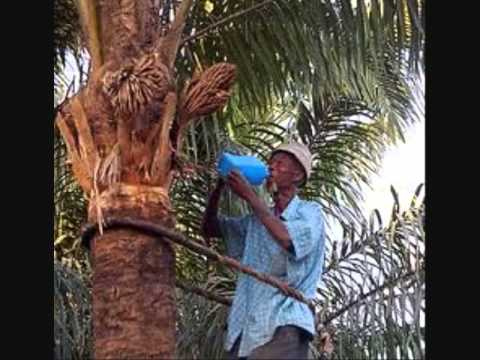 PALM WINE DRINKER