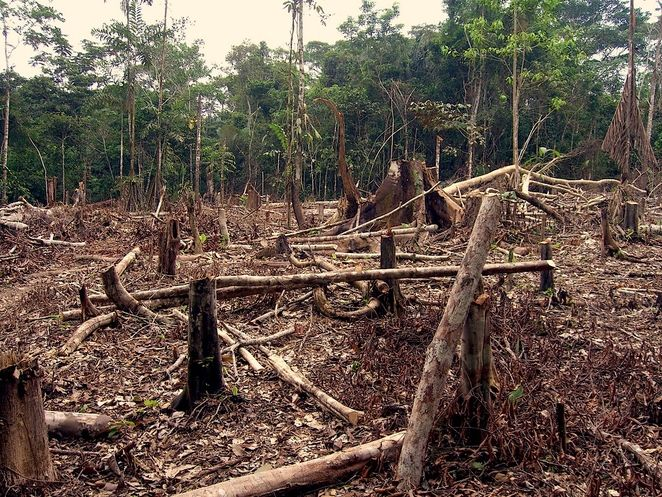 deforestation_in_the_amazon.jpg.662x0_q100_crop-scale