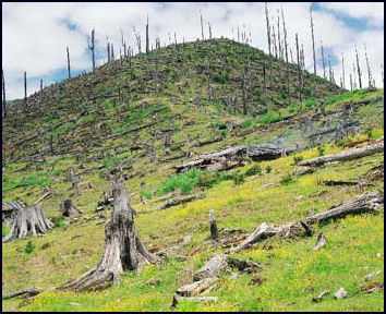 DEFORESTED MOUNTAIN